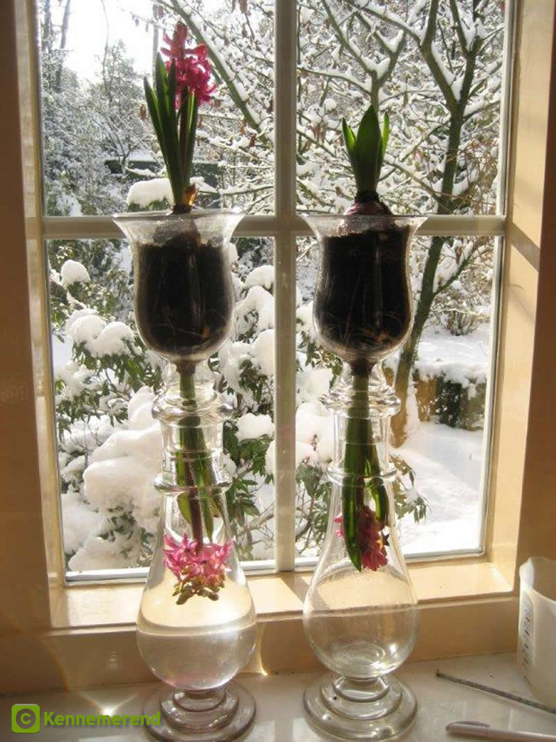 Hyacinth vases Holland