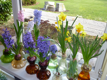 Collection hyacinth vases
